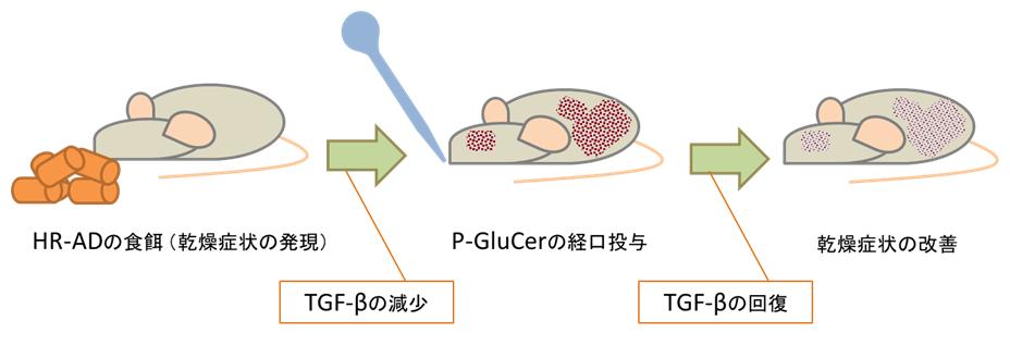 グルコシルセラミドの皮膚改善効果と作用機序についてイメージ